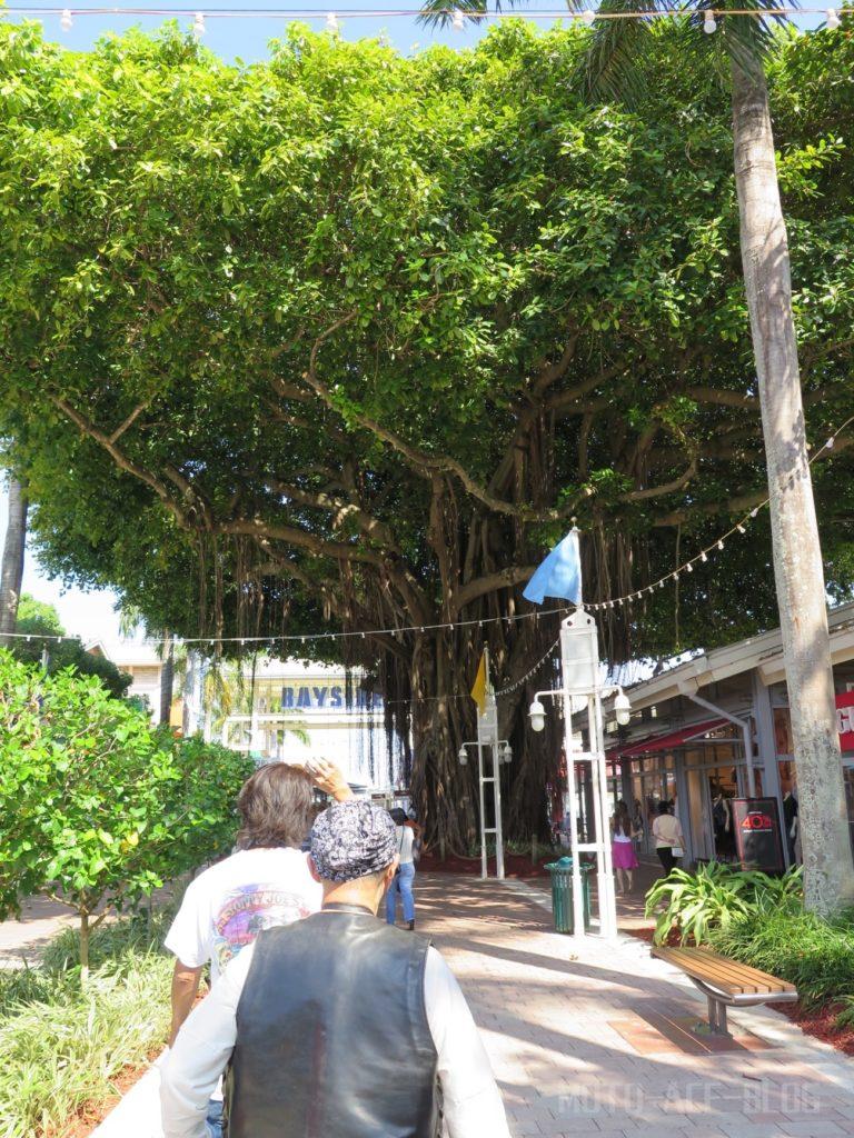 マイアミの自然